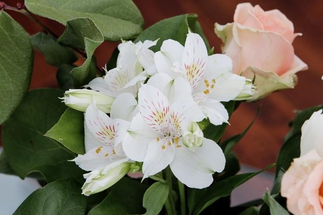 2015-03-Life-of-Pix-free-stock-photos-flowers-fresh-beautiful-hatching-leeroy