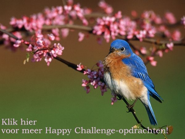 blue-bird_471_600x450