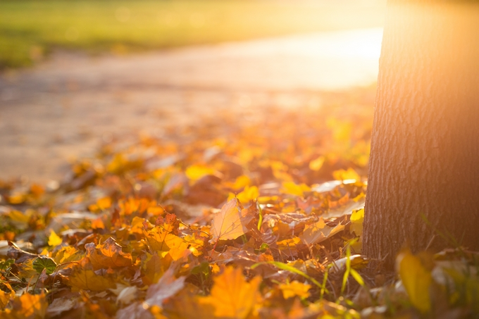 fall-autumn-leaves-on-the-ground-picjumbo-com